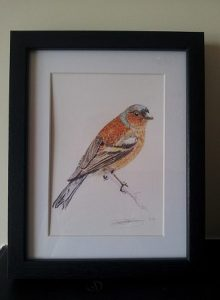 Framed Fine Art Watercolour of A Chaffinch By Darren Graham of Ephraim Art Studio