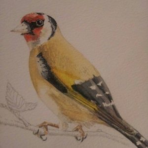 Detailed Fine Art Watercolour of A Goldfinch By Darren Graham of Ephraim Art Studio