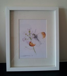 Framed Fine Art Watercolour of An Orange Tip Butterfly By Darren Graham of Ephraim Art Studio