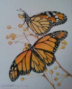 Close Up Of Fine Art Watercolour of Monarch Butterflies By Darren Graham of Ephraim Art Studio