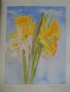 Spring Time Daffodils; Fine Art Print Of An Original Watercolour By Darren Graham of Ephraim Art Studio